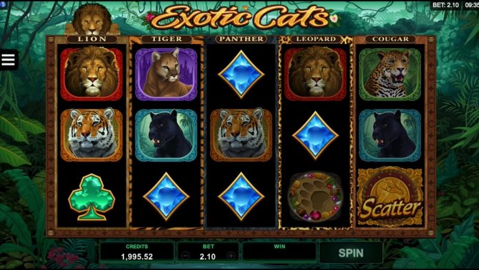 Slot Game Exotic Cats tipbongfree